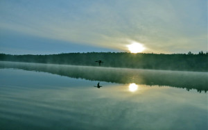 Paul's loon photo South Pond